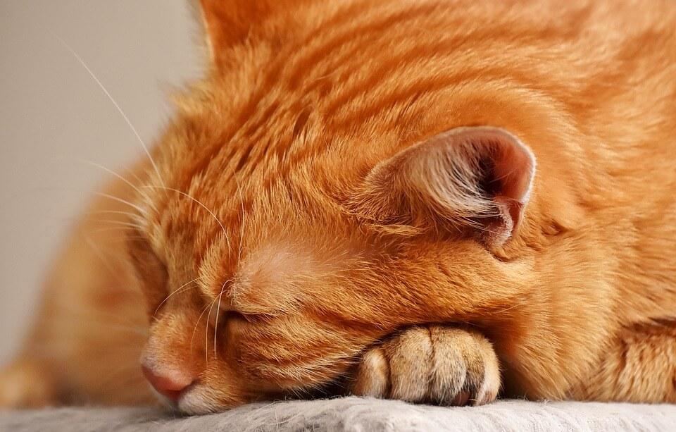 katte artikler - katte legetøj