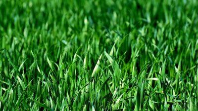 topdressing til græsplæne